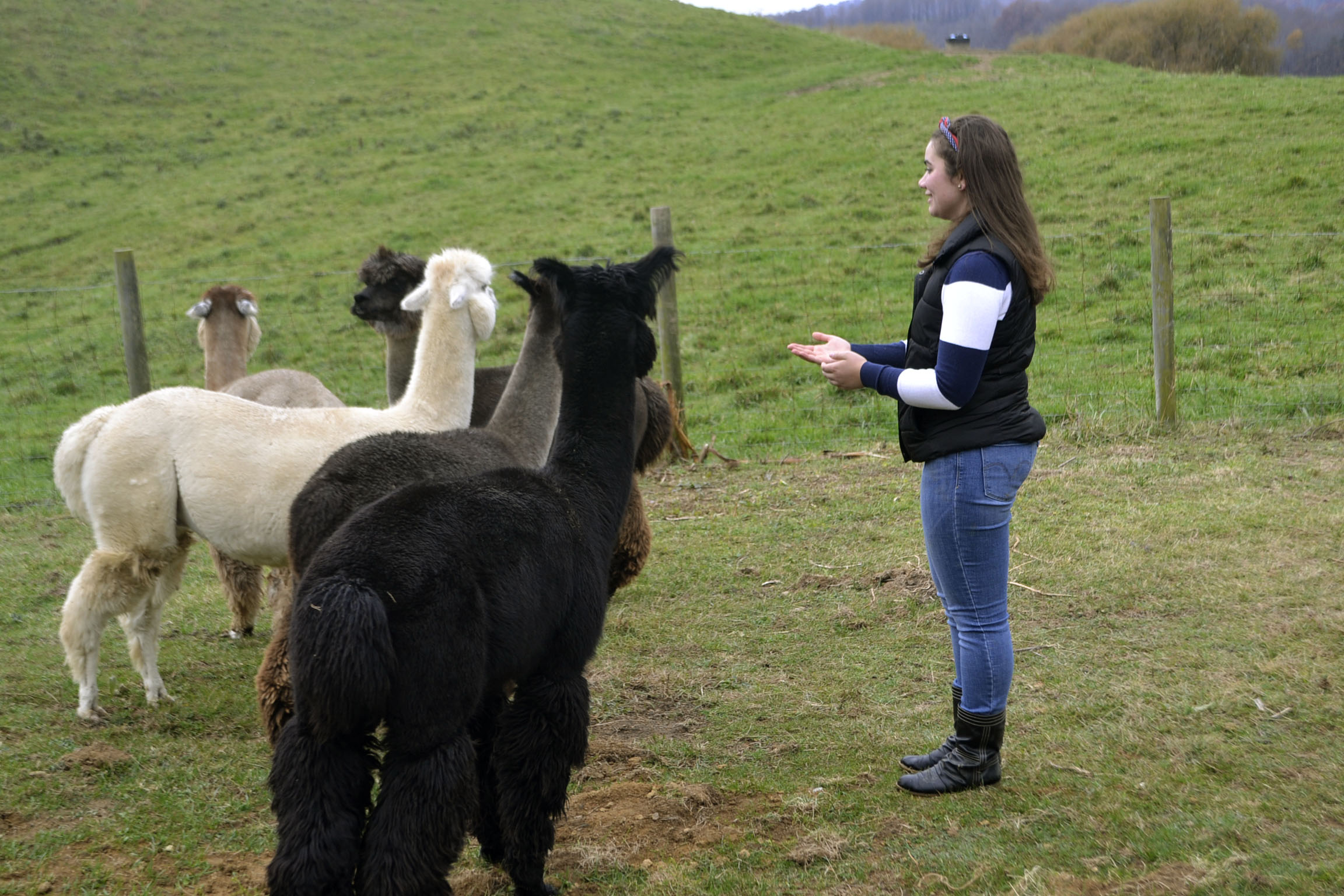 The alpacas learn something too